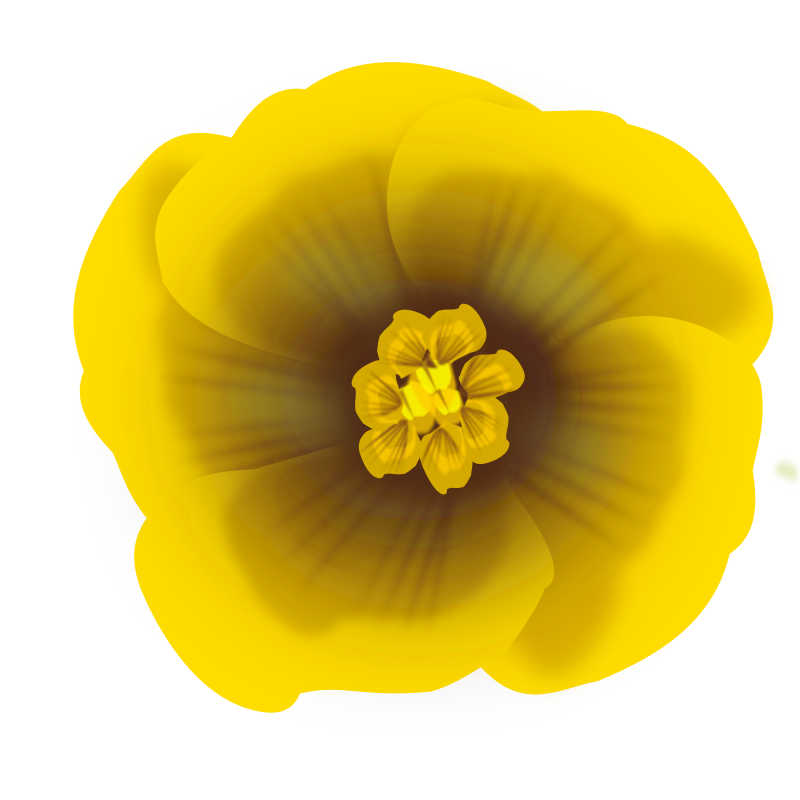 flower yellow by helisdf -