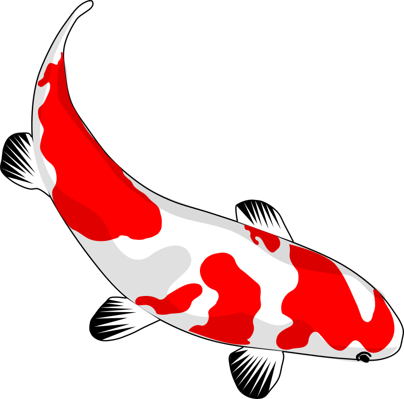 koi by stilg4r - koi fish