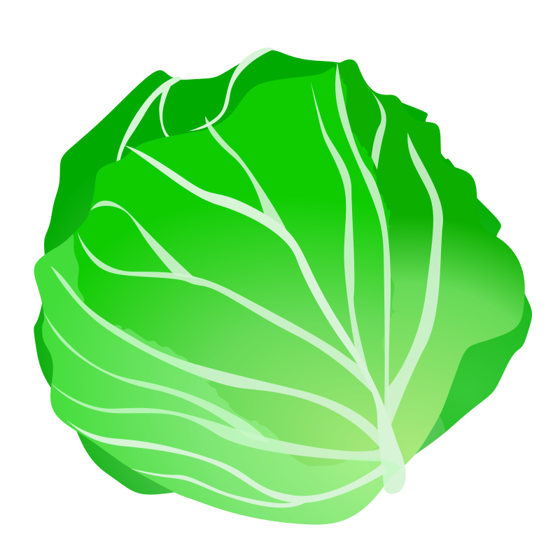 cabbage by ycteo -
