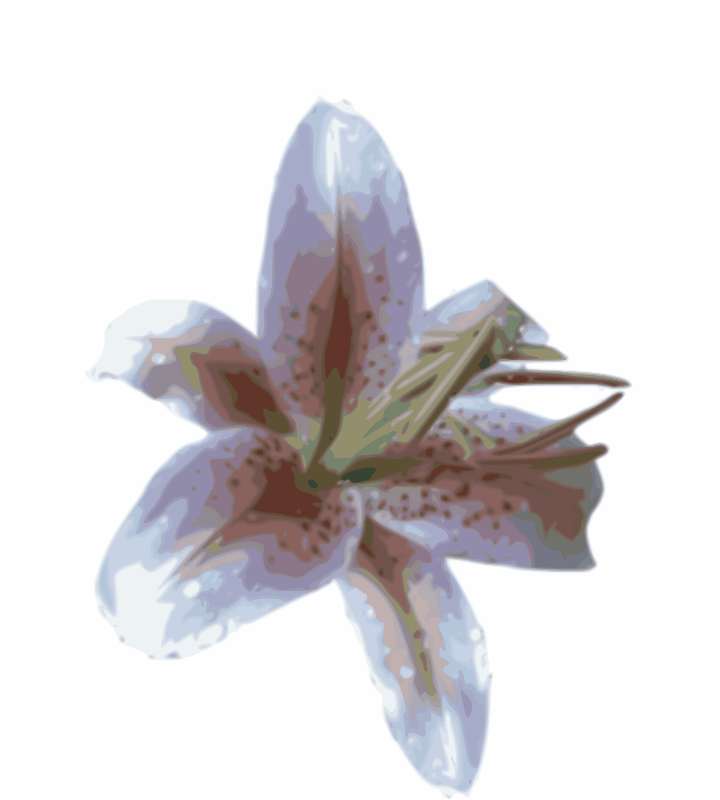Lily by puha.hu - photorealistic lily