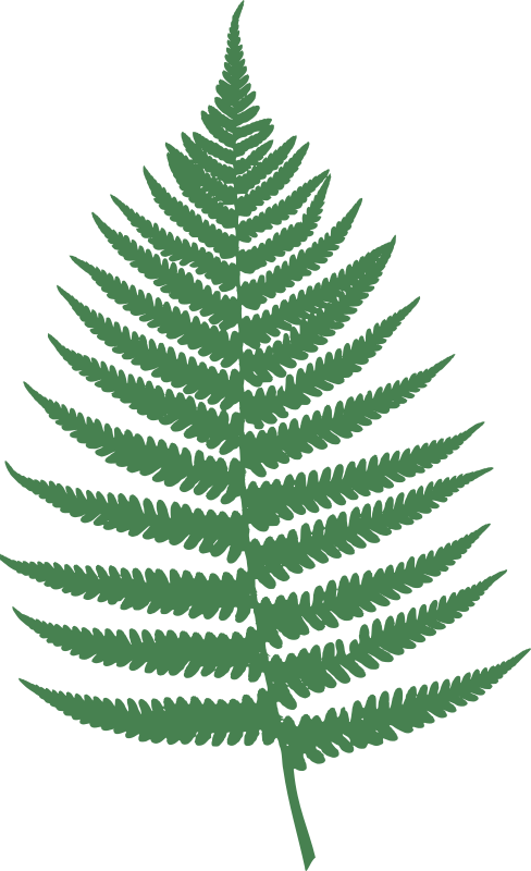 Fern leaf by Moini - Silhouette of a fern leaf, plucked yesterday in a nearby wood, then scanned and vectorized. Turned out the experiment worked fine :-)