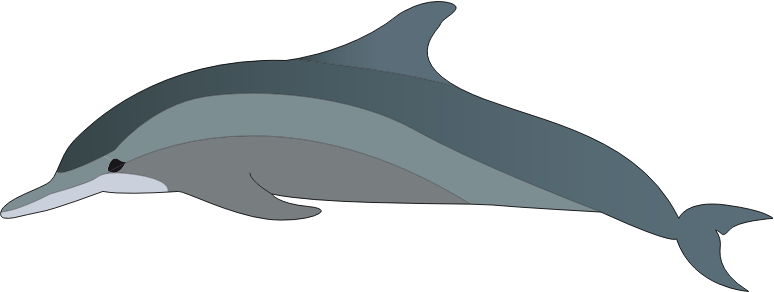 dolphin by presquesage
