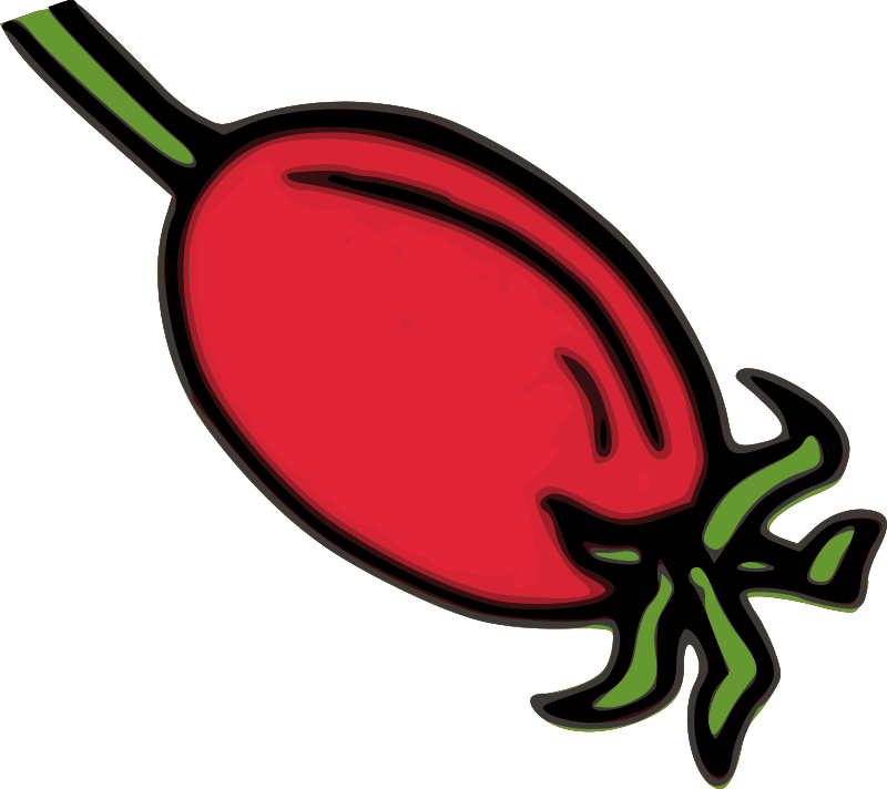 Rose Hip Fruit by qubodup
