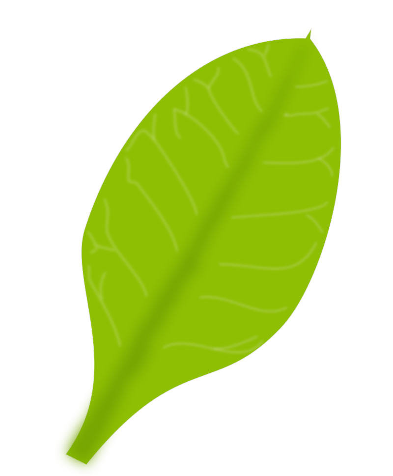 Green Leaf by mkhuda - green leaf