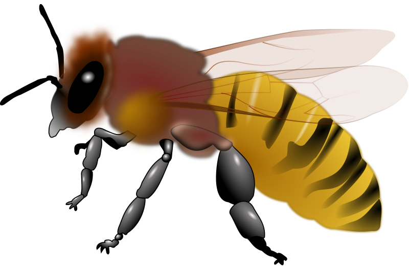 Honeybee by frankes