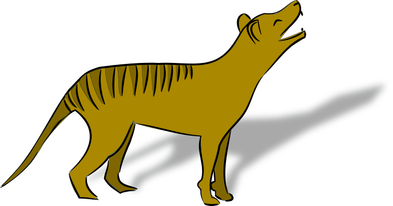 thylacine by bedpanner - Australian marsupial dog declared extinct in 1920, drawn from stuffed specimen in Perth Museum.