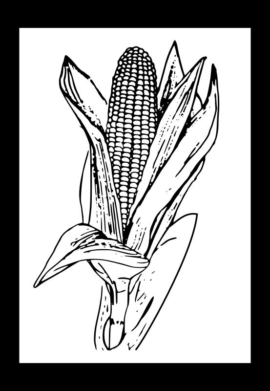 corn by Peileppe - A corn outline.