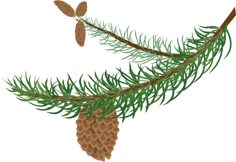fir branch with cones by OlKu - pine branch