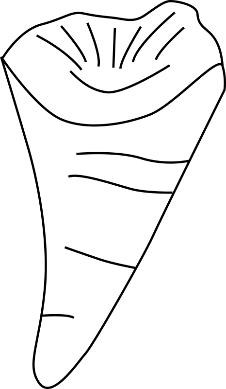 Clipart rugosa