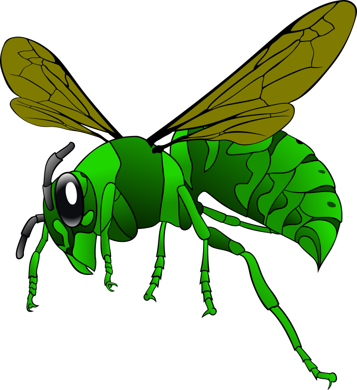 Green Hornet by mabroox - A svg drawing of a green hornet