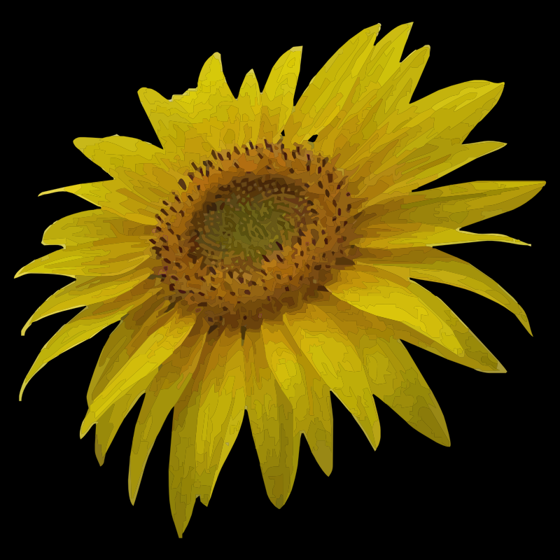 Clipart - sunflower