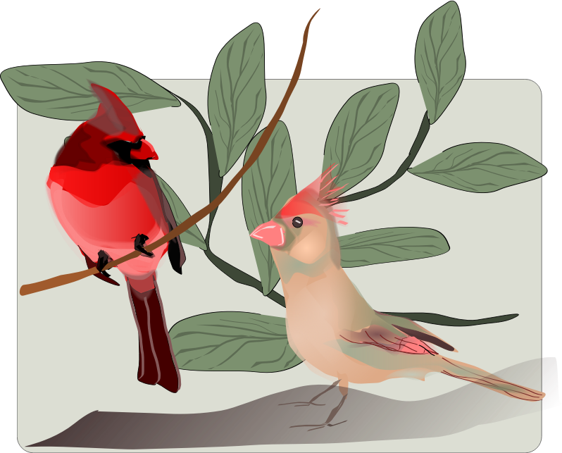 Two Birds Background by Reedabadeeda - Two birds in a background