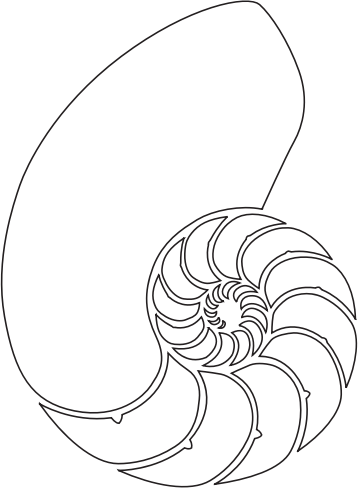Nautilus Shell by i2dllc - A Nautilus Shell in Vector format.