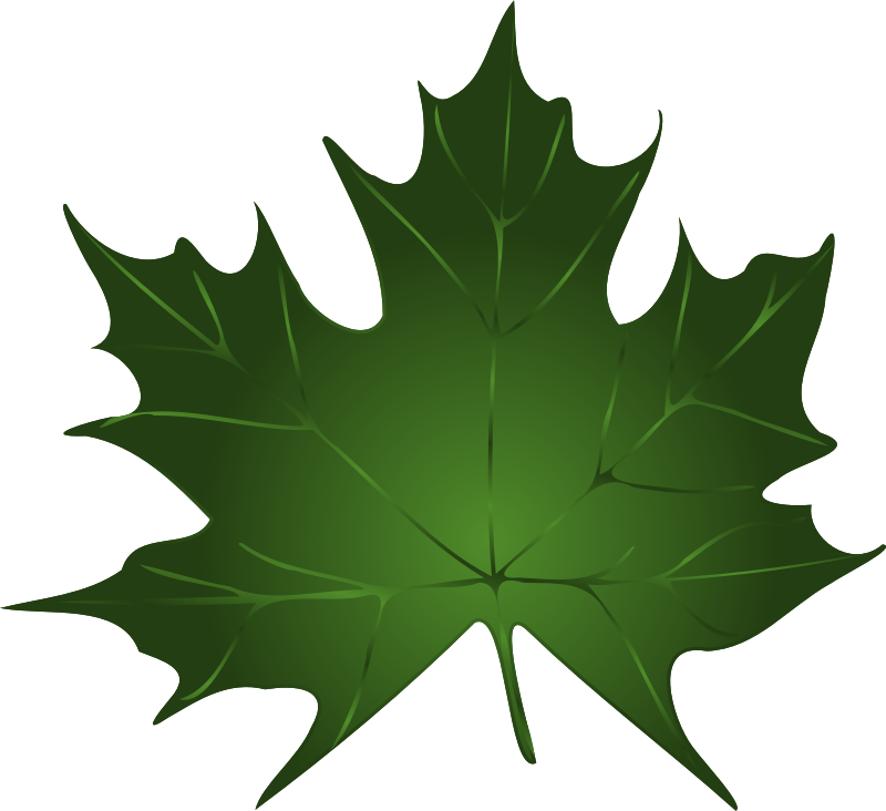 Lapas, maple leaf by Keistutis