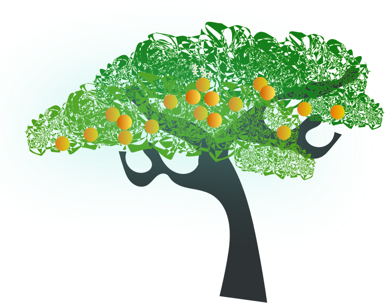 orange tree by chatard - The orange grows in the United States and in the group of Mediterranean countries