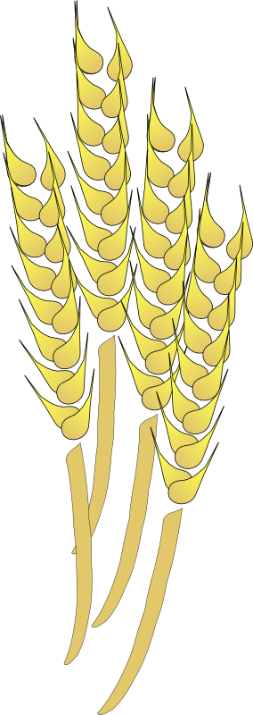 Wheat by davosmith - A few wheat sheaths that I drew to decorate a flier for a harvest celebration