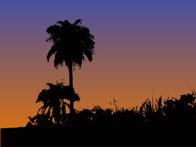 Palm Tree Silhouette by gustavorezende - Silhouette of a palm tree.