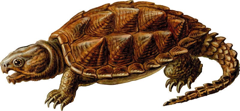 Prehistoric Turtle 1 by gustavorezende - Traced from http://en.wikipedia.org/wiki/File:Haeckel_Chelonia.jpg