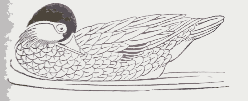 Duck Drawing by wanglizhong