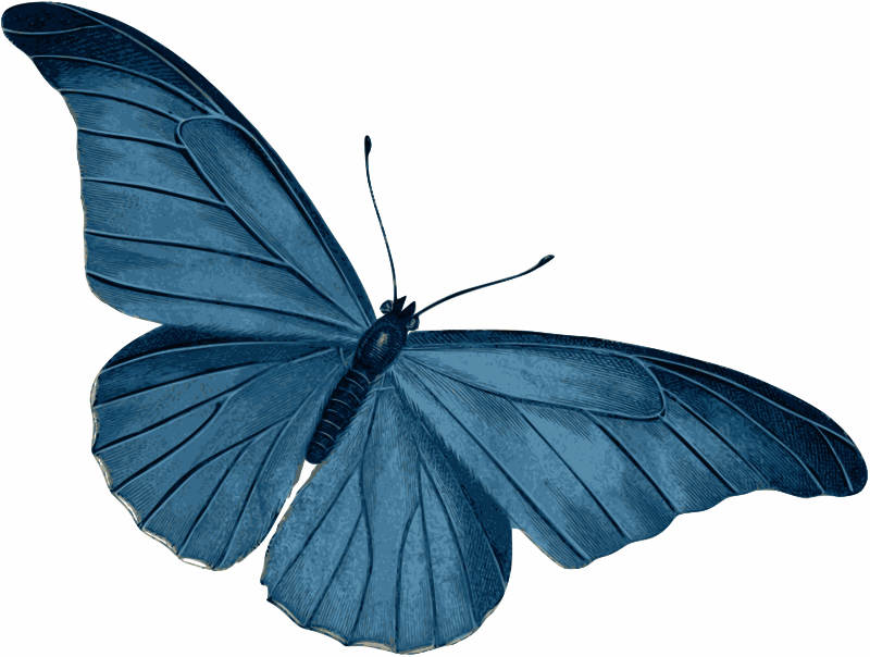 Blue Butterfly by gustavorezende - A blue butterfly, from 1847, France.