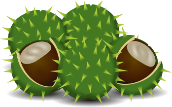 A couple of chestnuts by rdevries - An image of a couple of chestnuts.