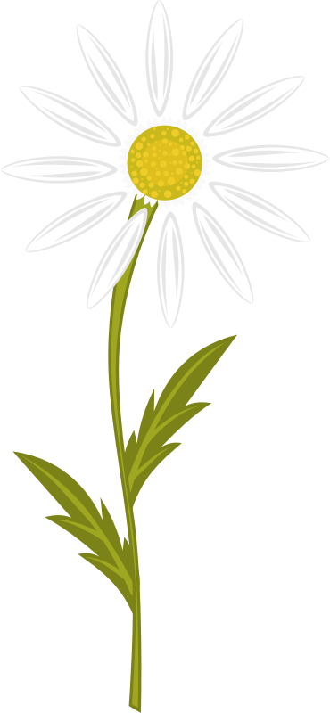 Camomile by AhNinniah - Camomile flower with separate petals