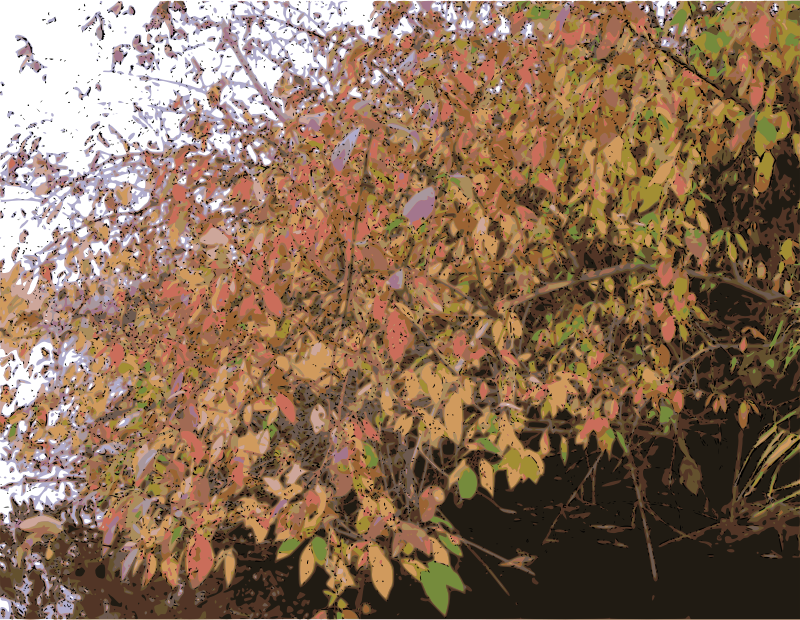 Bush in Autumn by Rambo Tribble - A colorful bush, overhanging a pond, in late autumn.