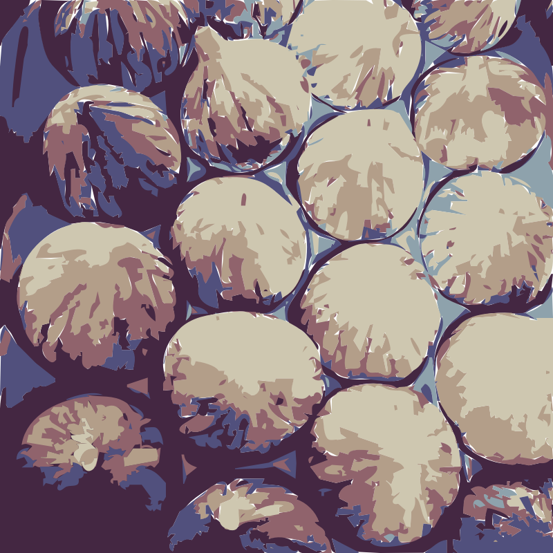 Super big Figs  by piano_317 -  figs - vectorized