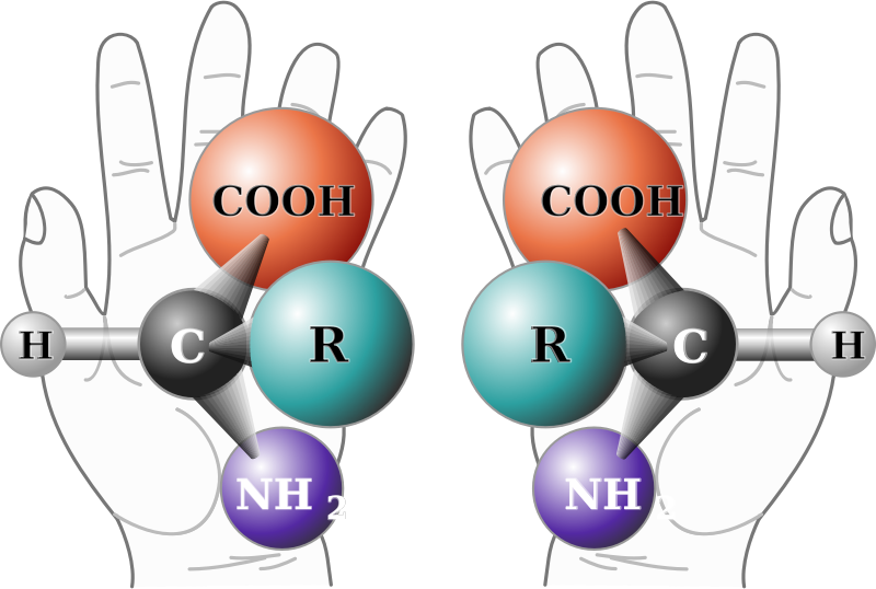 Chirality With Hands by Magirly - Public Domain Source http://commons.wikimedia.org/wiki/File:Chirality_with_hands.svg