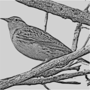 Western Meadowlark by gurdonark - A photo of a western meadowlark was converted to a pencil sketch using a photo editor. The resulting pencil sketch was traced to an .svg using Inkscape. Photo and sketch by gurdonark
