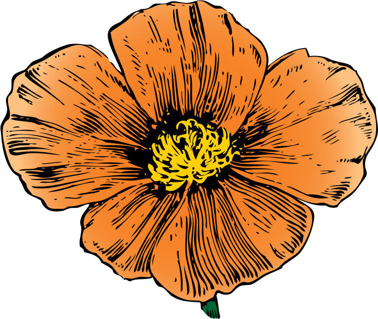 California Poppy by johnny_automatic - from an ad in House and Garden magazine, 1911