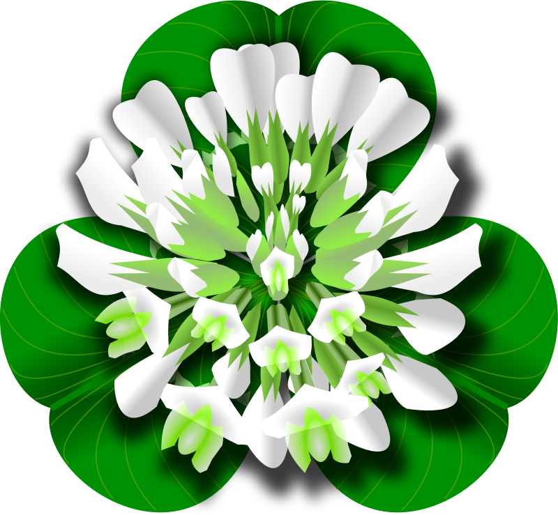 White Clover Flower by jesseakc - A white clover flower over a three leaf clover.