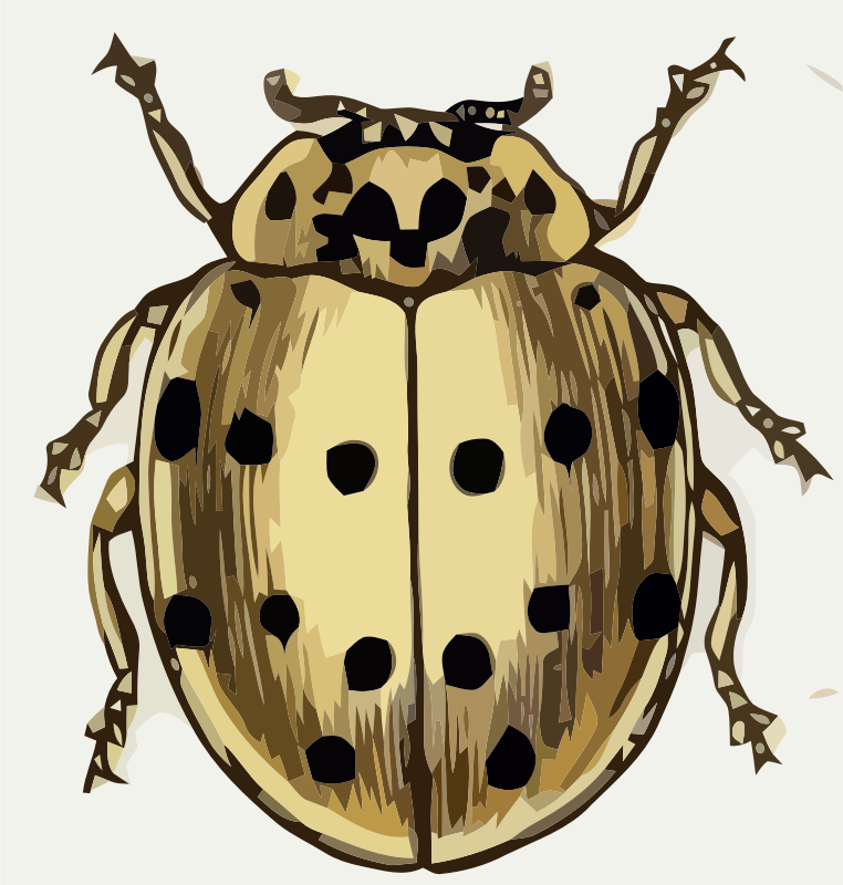 Coccinella sedicimpunctata by paulvern - A full color image taken from a old book and hand edited