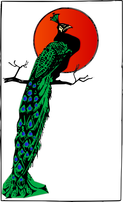 Angry Peacock by j4p4n - I cant help but think Peacocks have such a weird name. And I guess this peacock thinks the same thing about himself, because he has a sour expression on his face... (As a perfectionist, I deleted an earlier one that wasn't working for m