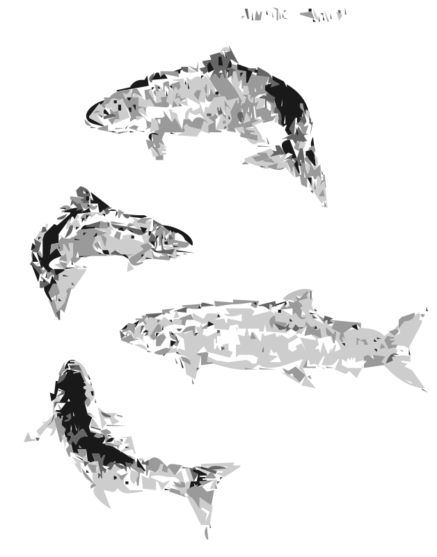 Atlantic Salmon (autotrace) by worldlabel - This public domain image comes from http://www.fws.gov/pictures/lineart/bobsavannah/atlanticsalmon.html and as of 2013-10-31 00:27:44 is this file, http://www.fws.gov/pictures/lineart/bobsavannah/graphics/atlanticsalmon.jpg. .fws.gov