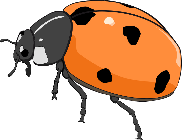 Coccinelle, ladybug by enolynn - Coccinelle cinq points. Ladybug with five points