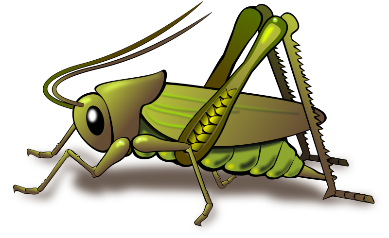 Cricket by Dux Phoenix - A cricket is an insect with somewhat ...