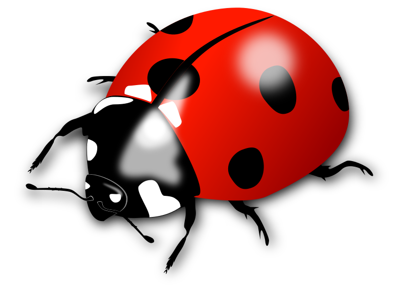 Ladybird by Dux Phoenix - The ladybirds have oval bodies with six short legs. Usually they  are red or orange with three spots on each side and one in the middle; they have a black head with white patches on each side.