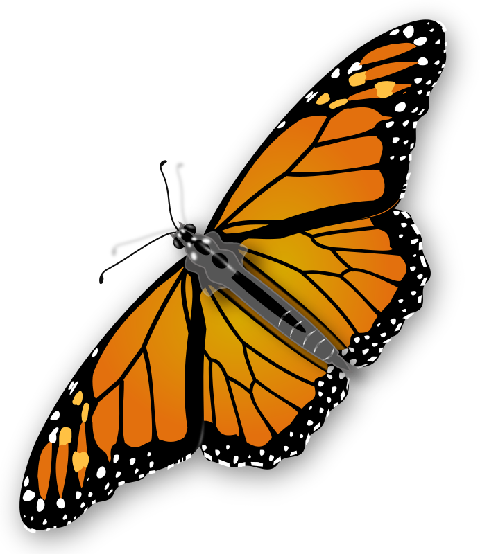 Monarch Butterfly by jimmiet