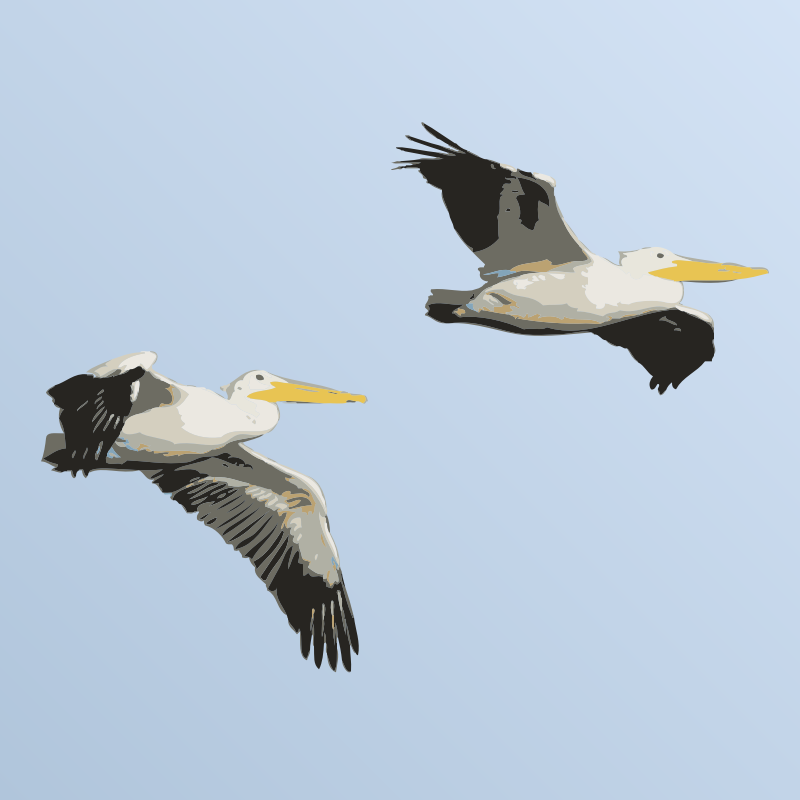 Pelicans in Flight by bnsonger47 - Simple image of two pelicans in flight against a field of blue.