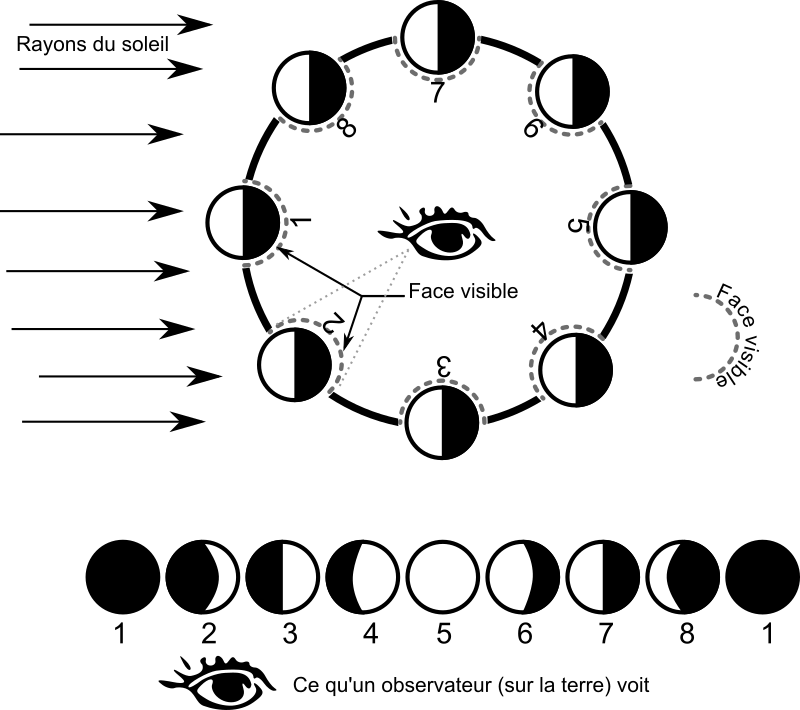 les phases de la lune - moon phases by waielbi