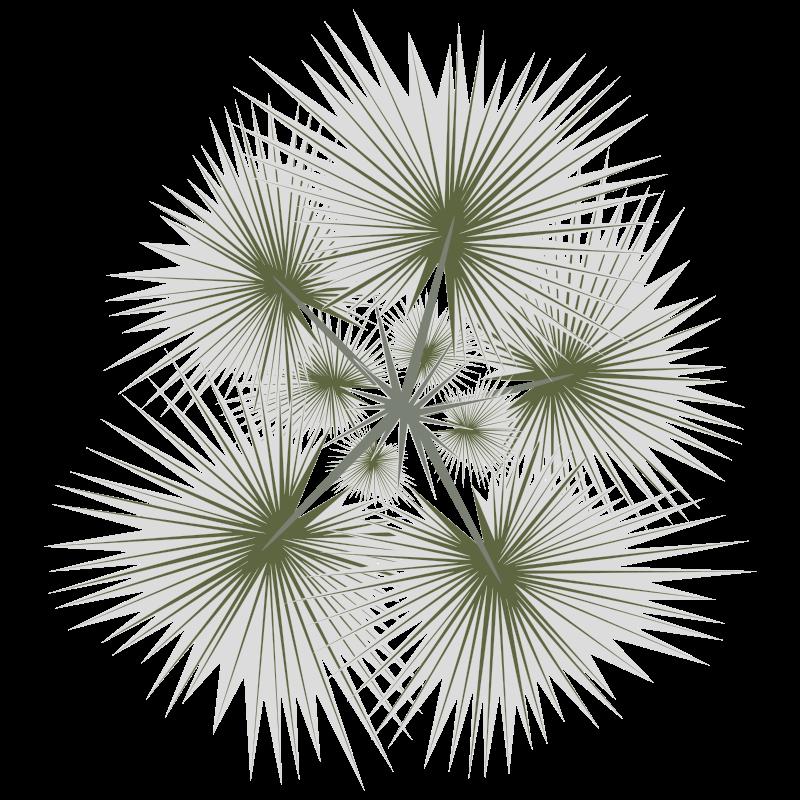 Clipart - palm-01b