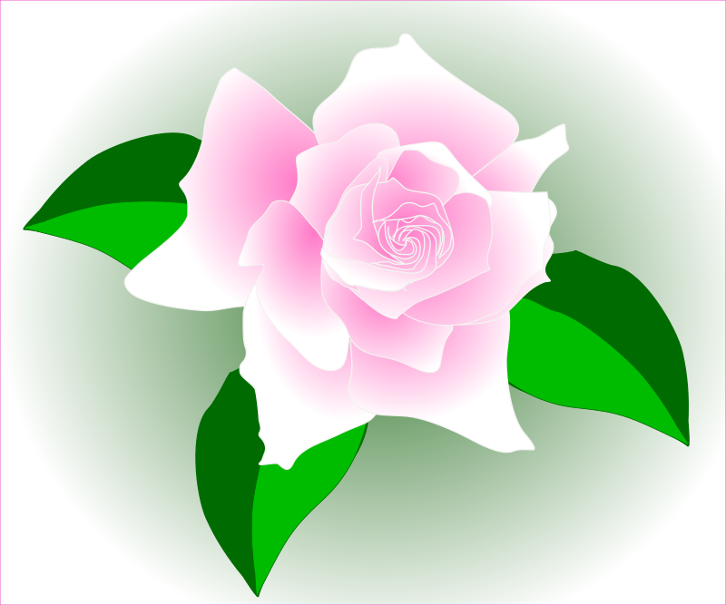 Pink rose - fixed by Grafixgrrl - Pink rose, three leaves.
