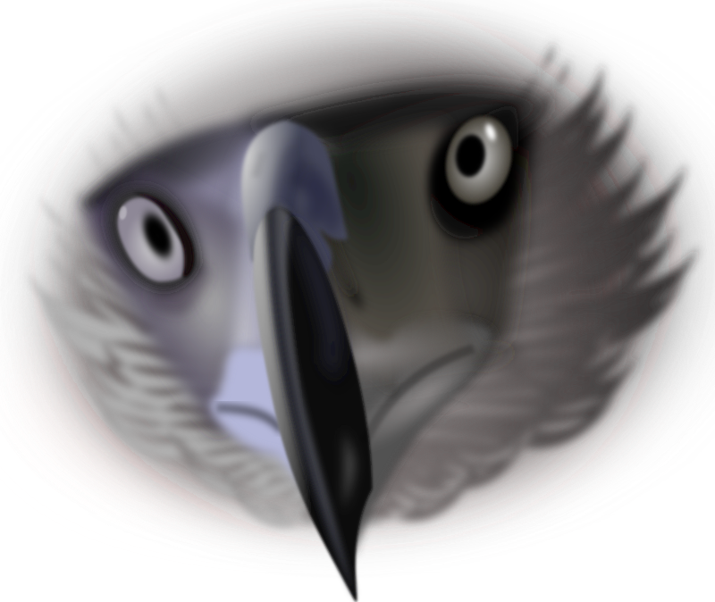 Eagle face by wsnaccad - Here is my second attempt of the Philippine eagle.