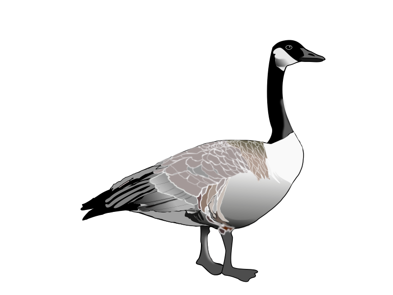 Clipart - Canadian Goose