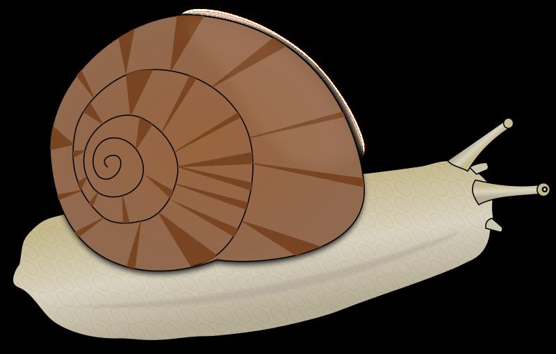 Clipart escargot - Clipart escargot ...