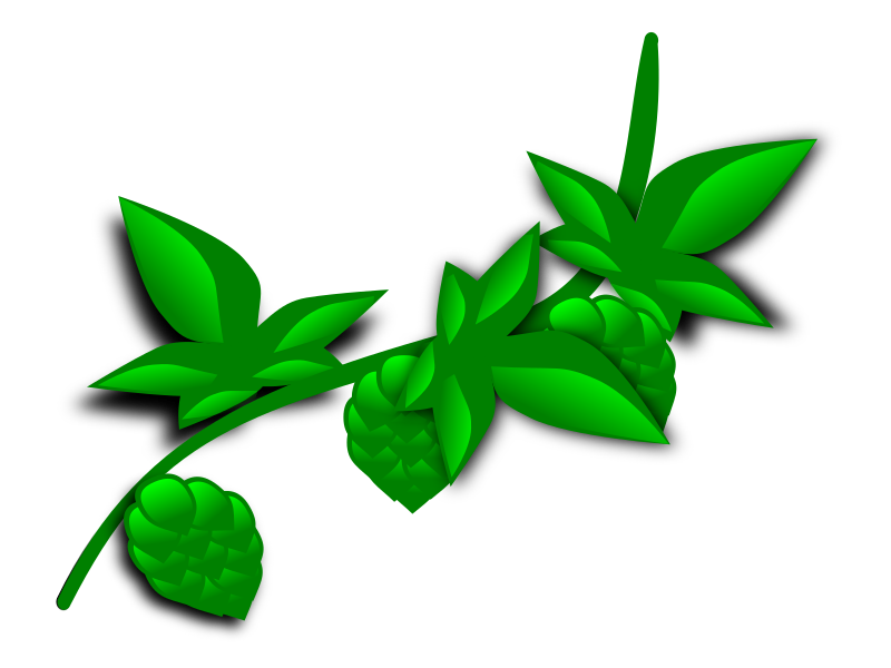 hops - illustrated by Farmeral - A vector drawing of some stylized hops on the vine.  First attempt.  could be better....
