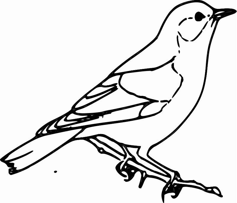 Clipart - Sparrow: https://openclipart.org/detail/203218/sparrow-by-siddymcbill-203218
