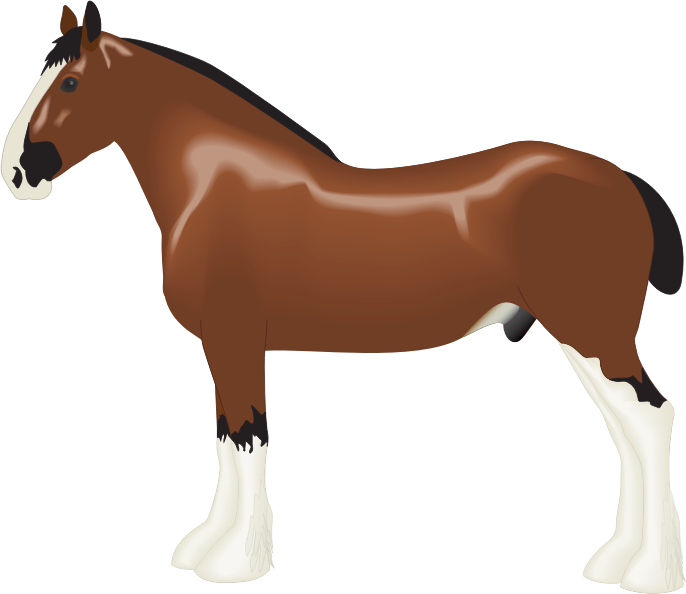 Clipart - Clydesdale Horse