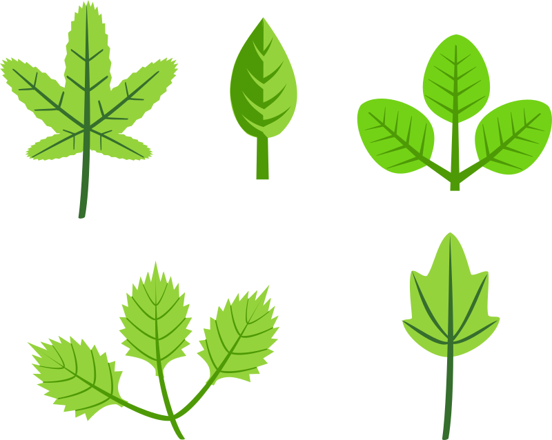 Set of leaves by rg1024 - Set of leaves illustrations.